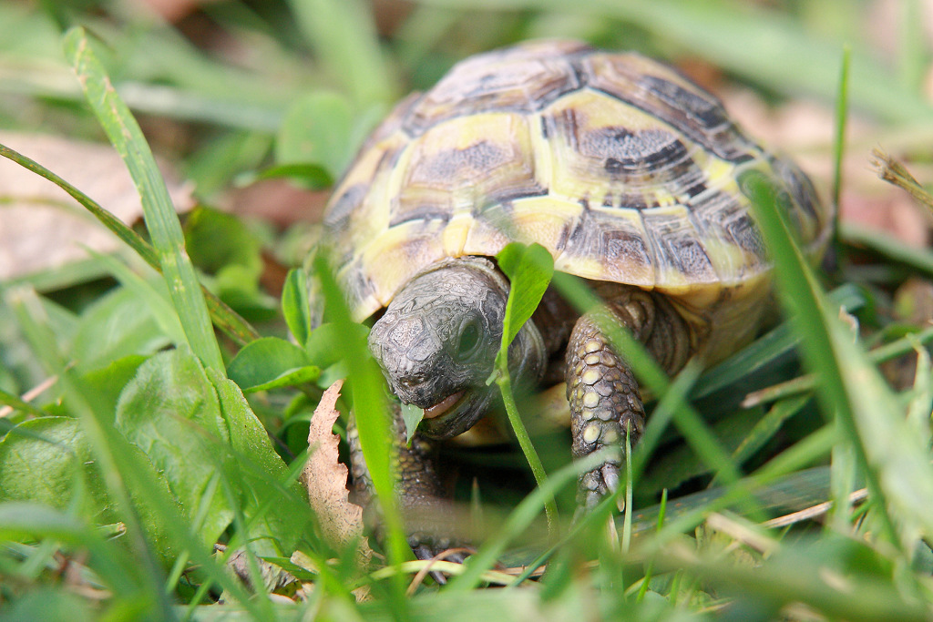 tortue_091011_101-0912