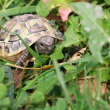tortue_091011_101-0916