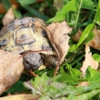 tortue_091011_101-0923