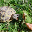 tortue_091011_101-0933